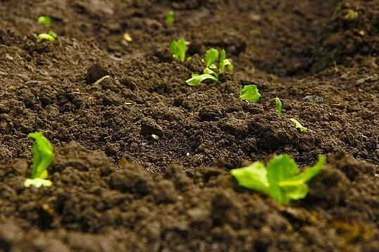 How_To_Improve_Soil_Quality_A_Guide_For_Farm_Managers.jpg