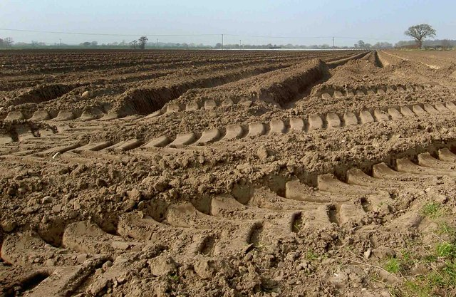 Quick_Tips_For_Improving_Soil_Quality_For_Crop_Improvement.jpg